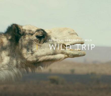 WILD TRIP /// TURQUIE